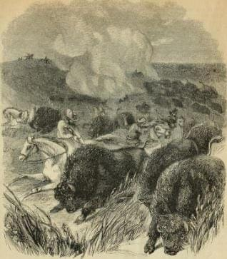 The buffalo hunt was central to Metis life throughout their history
